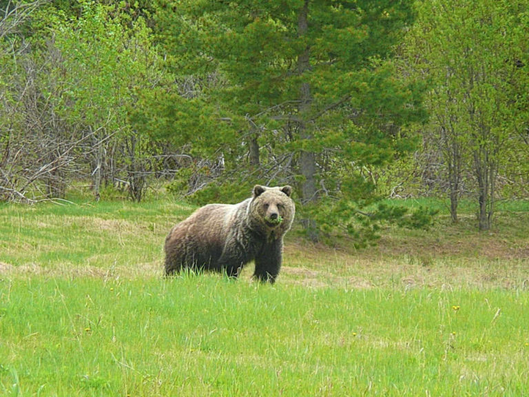 Охота на медведя в Нижегородской области