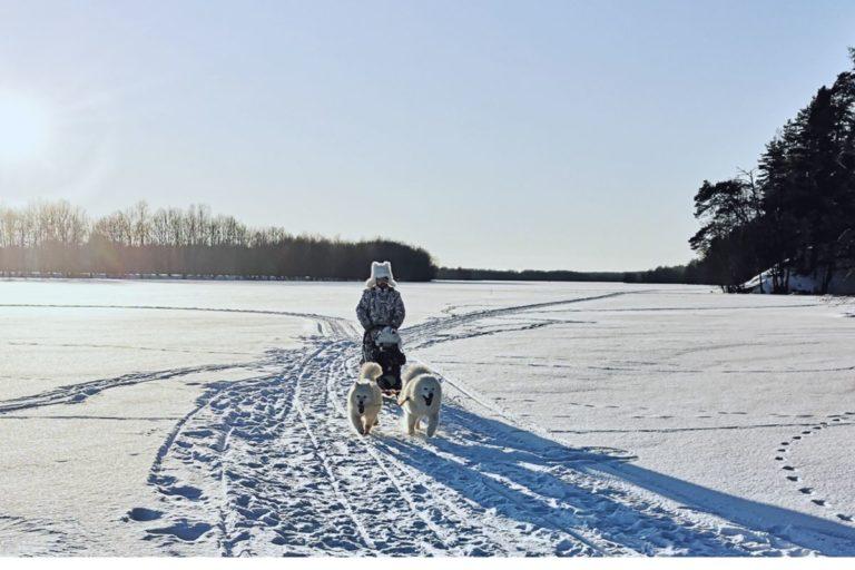 Катание на собачьих упряжках в Нижнем Новгороде