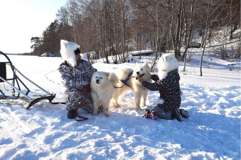 Катание на собаках в Нижнем Новгороде