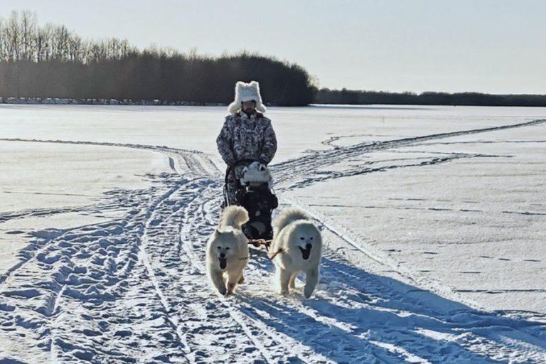 Катание на собаках в нижегородской области