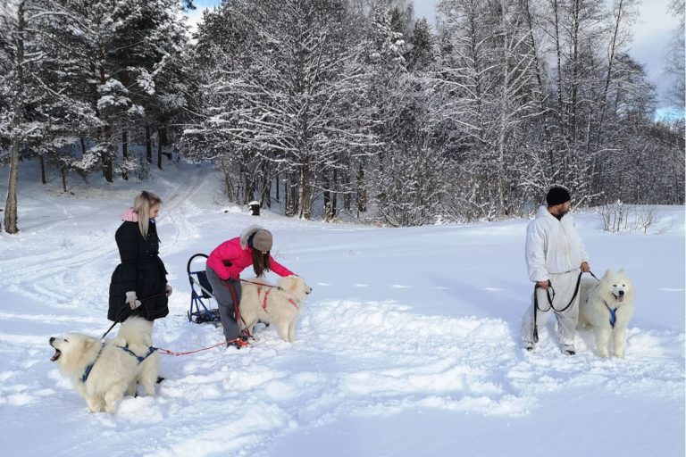 Катание на собаках в Нижнем Новгороде и области